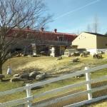 六甲山牧場に冬に子連れで行ってみた!冬でも楽しい牧場体験!