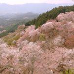 青の交響曲で吉野に桜を見に行きたい!空席状況は?電話して聞いてみた!