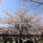 桜ノ宮でのお花見の場所取りのコツ!混雑状況やおすすめスポット教えちゃいます!